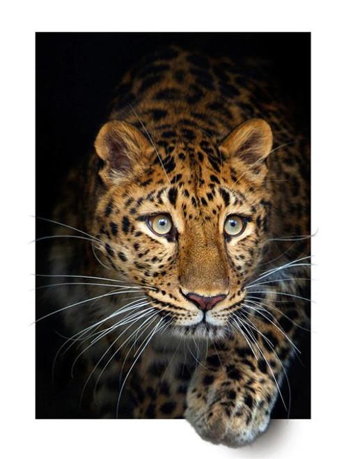 5D Diamond Painting White Frame Leopard Kit
