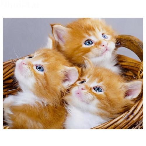 5D Diamond Painting Three Orange Kittens in a Basket Kit