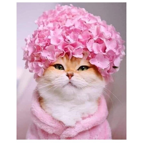 5D Diamond Painting Pink Flower Cat Kit