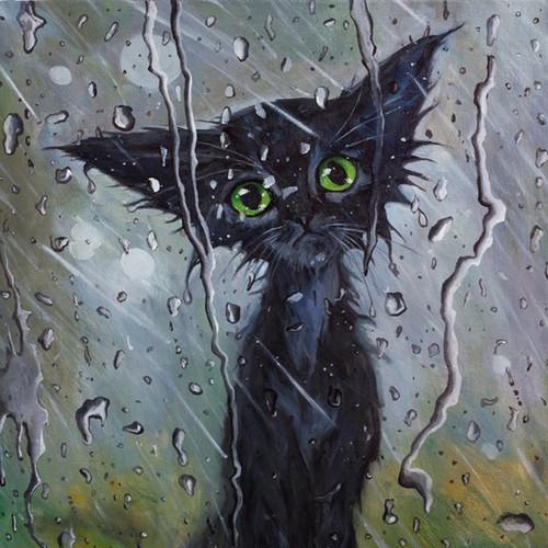 5D Diamond Painting Black Cat in the Rain Kit