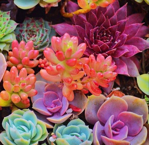 5D Diamond Painting Colorful Succulents Kit