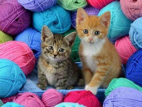 5D Diamond Painting Two Kittens in Yarn Kit