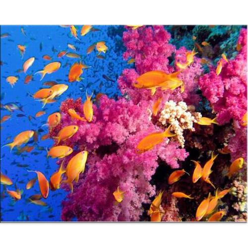 5D Diamond Painting School of Orange Fish Kit