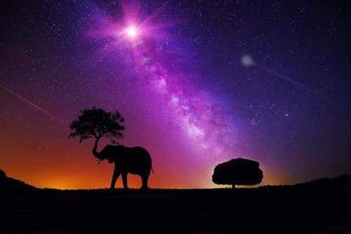 5D Diamond Painting Elephant & Tree Silhouette Kit