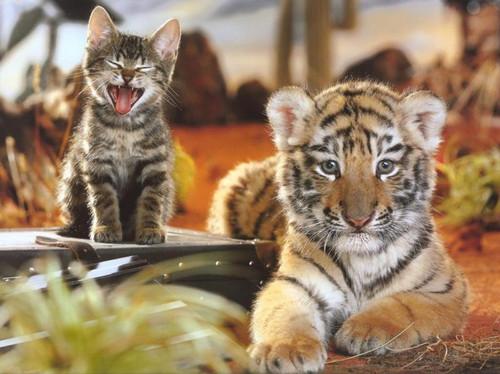 5D Diamond Painting Kitten and Tiger Cub Kit