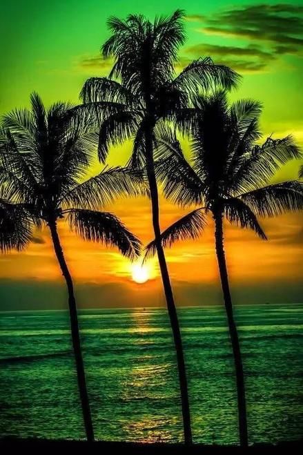 5D Diamond Painting Green Palm Tree Sunset Kit