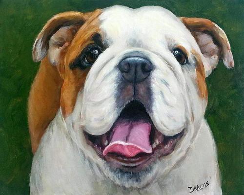 5D Diamond Painting Smiling Bull Dog Kit