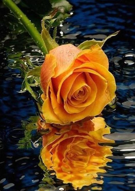 5D Diamond Painting Orange Rose Water Kit