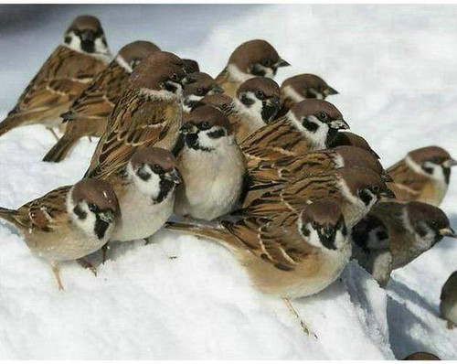 5D Diamond Painting Sparrows in the Snow Kit