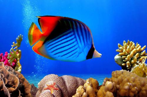 5D Diamond Painting Blue Tropical Fish Kit
