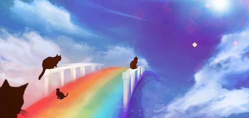 5D Diamond Painting Rainbow Cat Bridge Kit