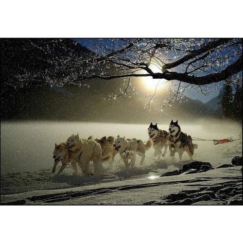 5D Diamond Painting Snow Sledding Dogs Kit