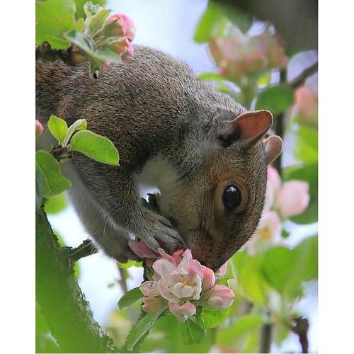 5D Diamond Painting Pink Flower Squirrel Kit