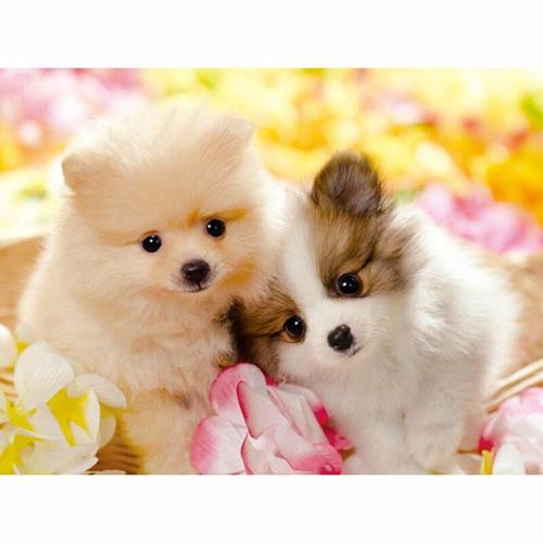 5D Diamond Painting Two Pomeranian Puppies Kit