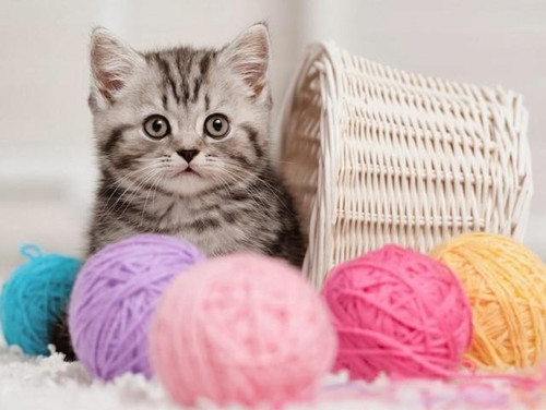 5D Diamond Painting Kitten and Balls of Yarn Kit