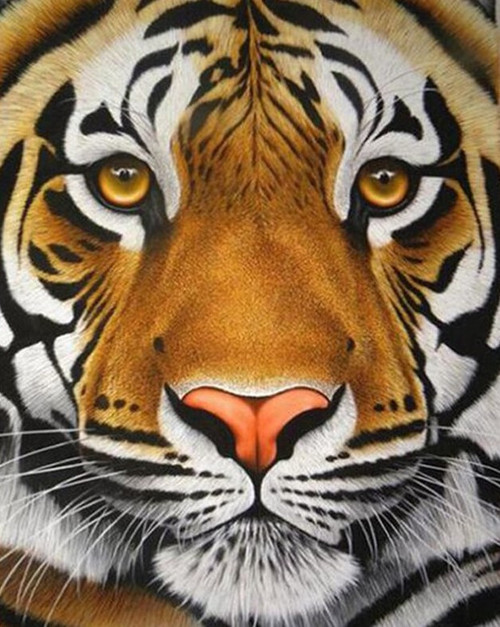5D Diamond Painting Tiger Face Closeup Kit