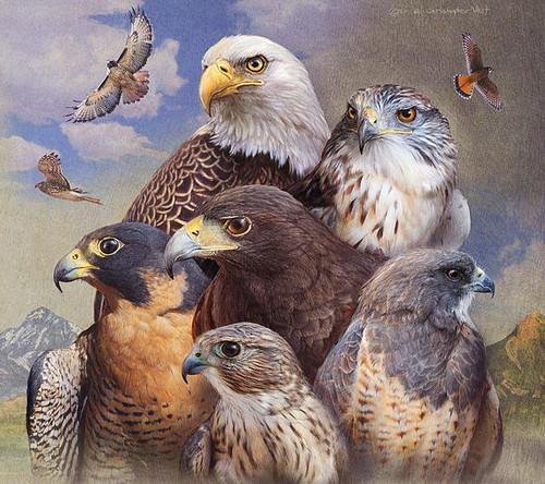 5D Diamond Painting Birds of Prey Kit
