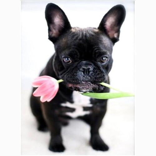 5D Diamond Painting Puppy with a Tulip Kit