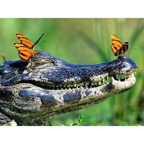 5D Diamond Painting Alligator & Butterflies Kit