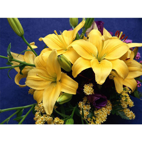 5D Diamond Painting Yellow Star Lilly Kit
