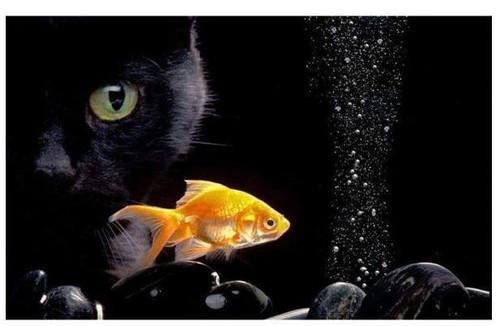 5D Diamond Painting Black Cat and the Goldfish kit