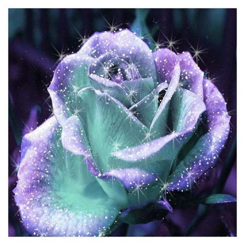 5D Diamond Painting Aqua and Lavender Rose Kit