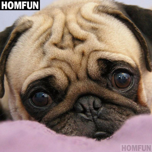 5D Diamond Painting Cute Pug Face Kit