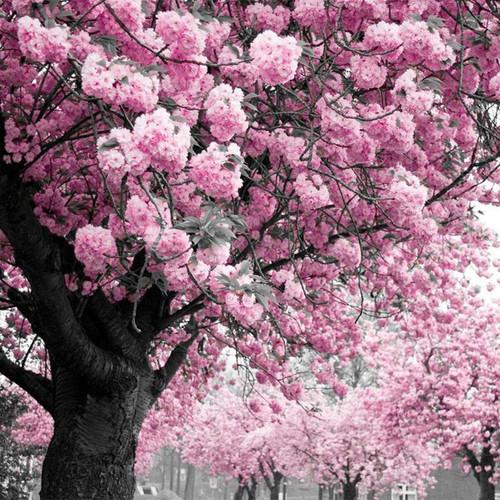 5D Diamond Painting Pink Blossoms Kit