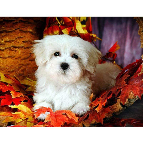 5D Diamond Painting Maltese Puppy in the Leaves Kit