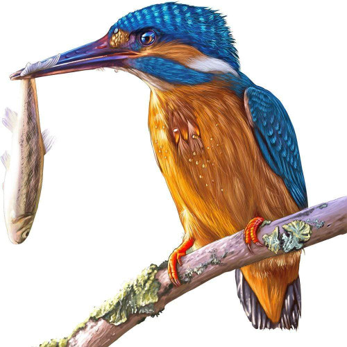5D Diamond Painting King Fisher and a Fish Kit