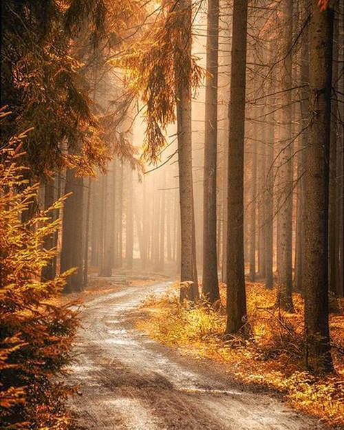5D Diamond Painting Road through the Trees Kit