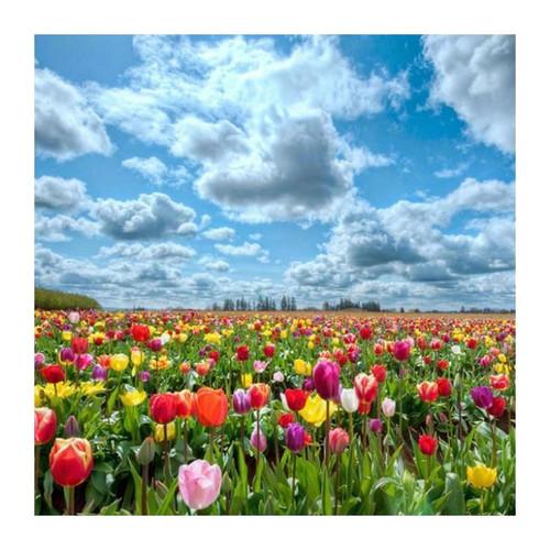 5D Diamond Painting Tulips under a Clouded Sky Kit