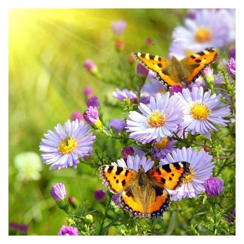 5D Diamond Painting Butterflies and Daisies Kit