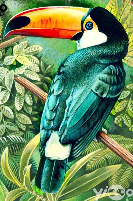 5D Diamond Painting Green Feather Toucan Kit