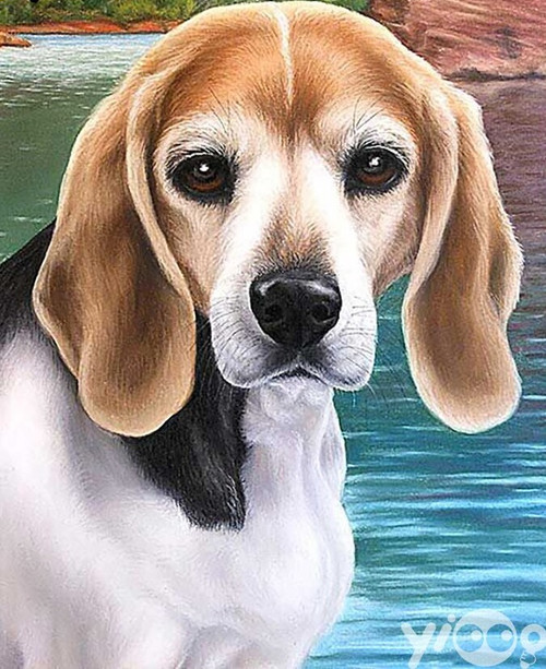 5D Diamond Painting Beagle by the Water Kit