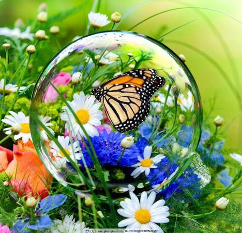 5D Diamond Painting Butterfly Bubble Kit