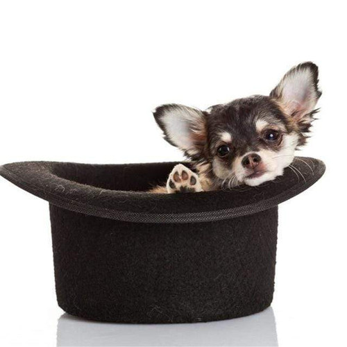 5D Diamond Painting Top Hat Chihuahua Kit
