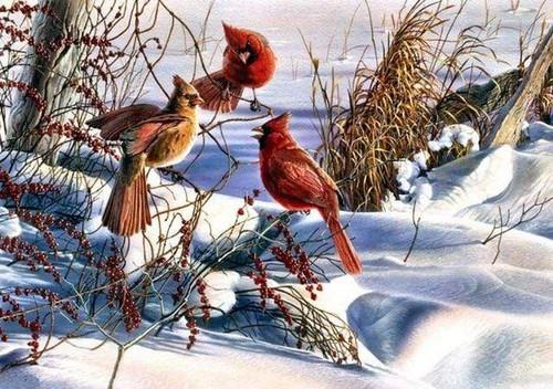 5D Diamond Painting Cardinals in the Snow Kit