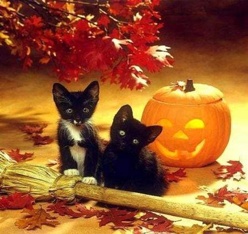 5D Diamond Painting Two Black Kittens Kit