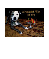 A Hannuka Pit Bull Wish For You Cards (Pack of 10)