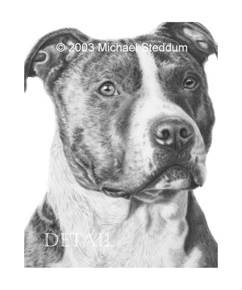 Pit Bull Pencil Drawing Note Cards (Set of 5)
