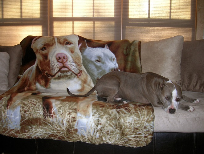 Pit Bull Fleece Throw