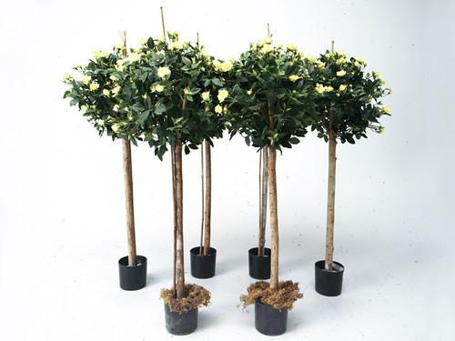 Decorative Rose Trees