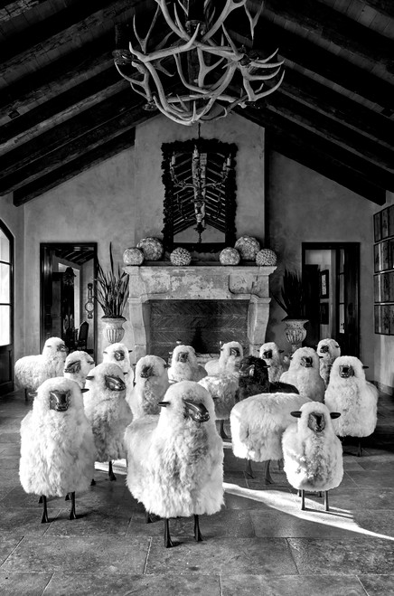 Black & White Photograph of a Flock of Sheep Main