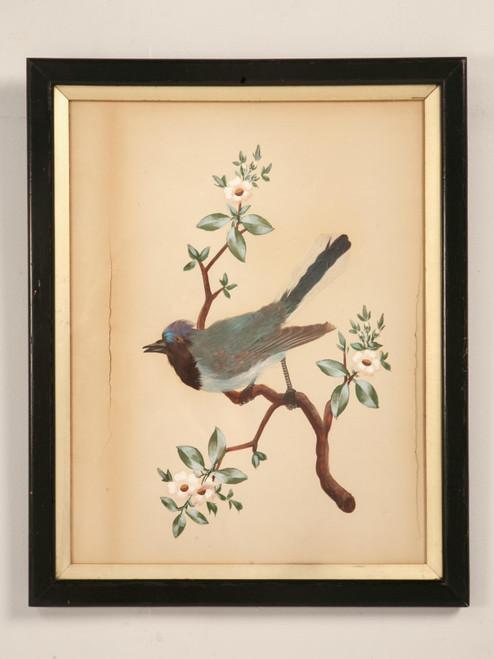 Vintage Feathered Bird Portrait