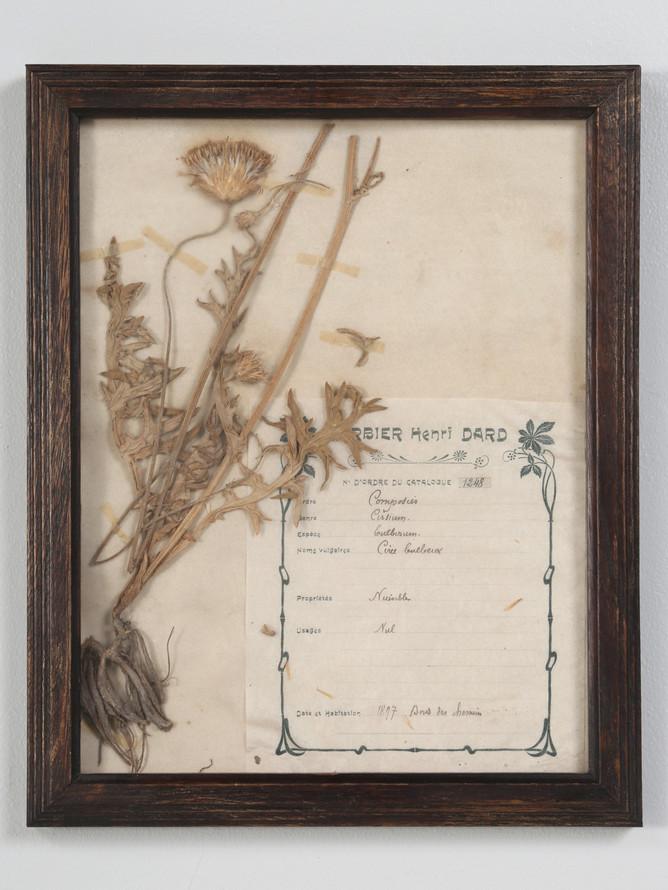 Pressed French Botanical, circa 1897