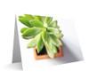 """Succulent"" Card"