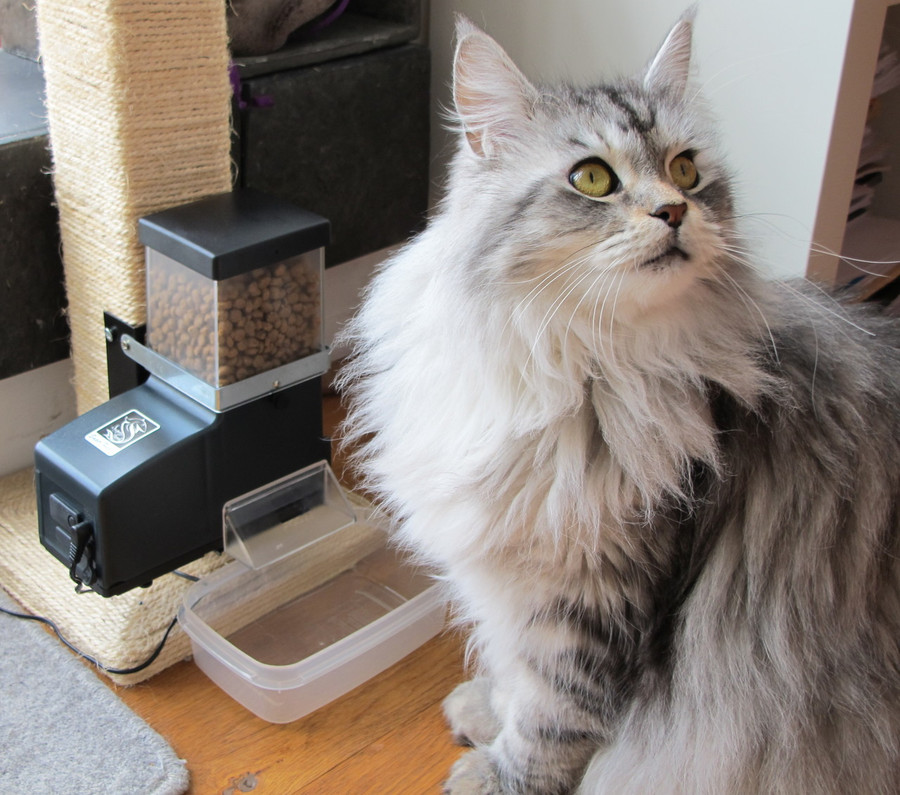 Wall Mount Cat Feeder,Deal #17,CSF-3 Basic,ACAT-23 Indoor Analog Timer