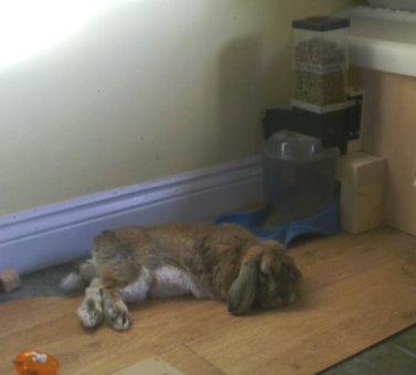 billy-rabbit-2.jpg