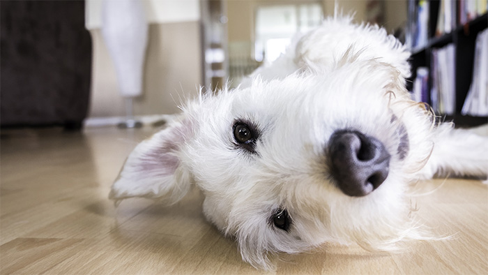 Underfloor heating and pets